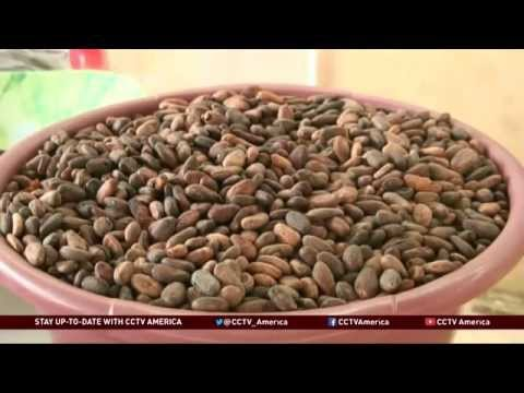 African Entrepreneurs in Togo Create Chocolate Business