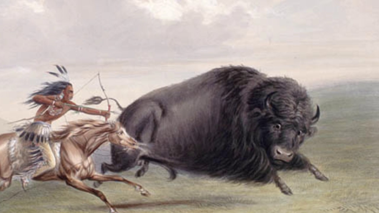 BUFFALO SLAUGHTERED FOR THE HIDE ON THE PLAINS BUFFALO