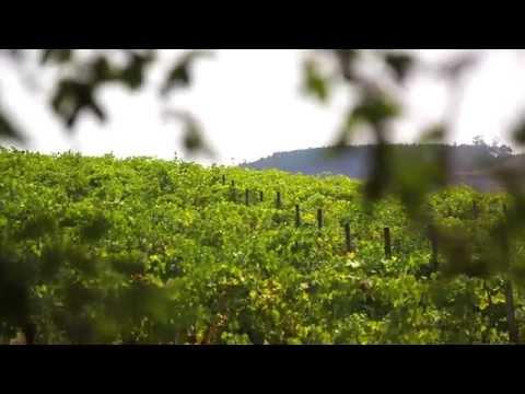 Humus Organic Wines