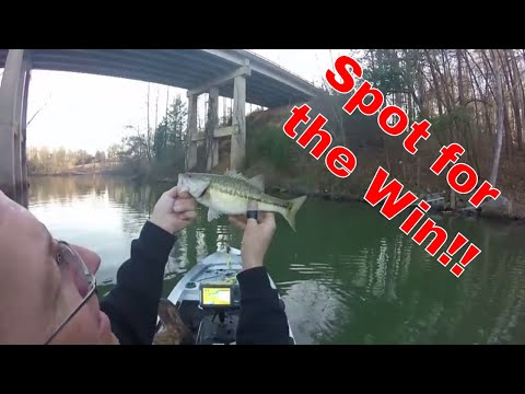 Late Winter Spotted Bass