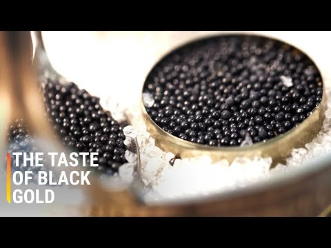 Inside The Largest Caviar Factory In The World