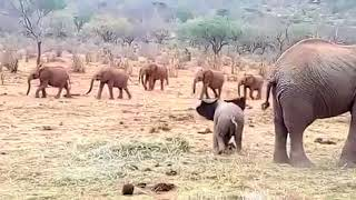 Nusu is chasing the orphans