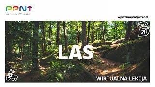 Las - wirtualna lekcja #1