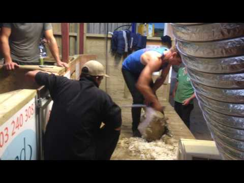 Worlds fastest sheep shearer