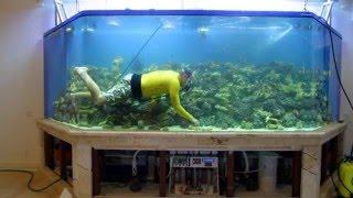 видео рыбки аквариумные