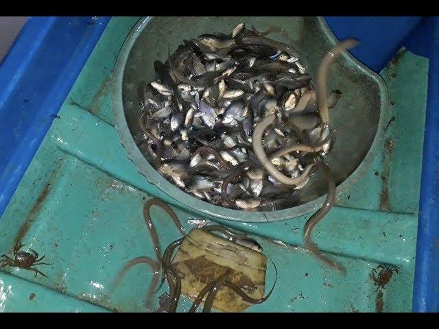 Đổ 5 cái dớn lươn, cá, rắn đầy cả ghe - Khám phá vùng quê