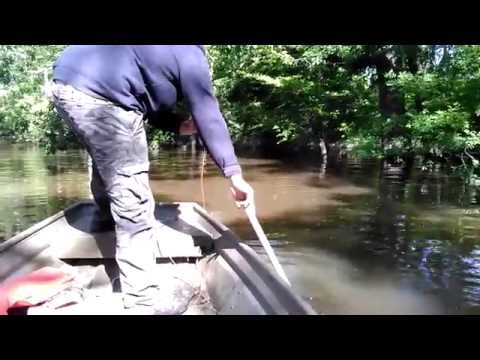 Video Neuse river catfishing