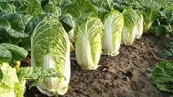 Die 10 Gesündesten Gemüsesorten der Welt!