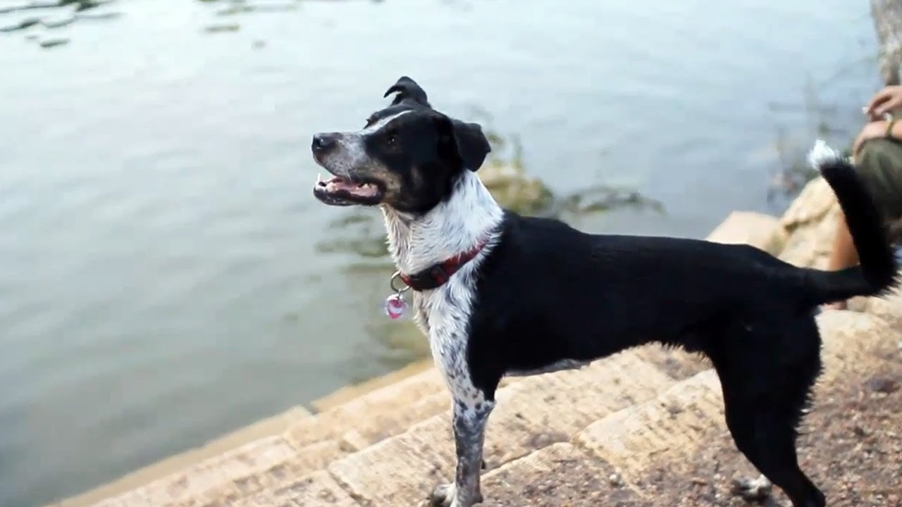 Border Collie-Blue Heeler Mix Chases a Squirrel   The Daily Puppy ...