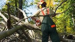 HD! Baum fällt - Die Forstarbeiter [Doku]