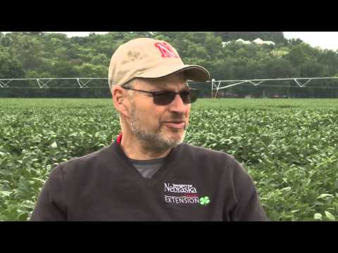 Soybean Nitrogen Use - Charles Shapiro - September 13, 2013