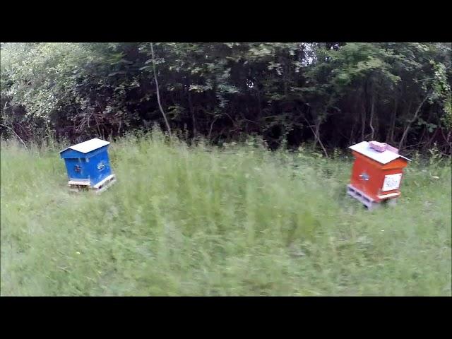Visite aérienne du premier rucher
