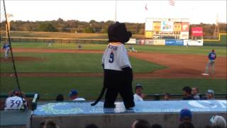Fort Worth Cats Baseball || Me As Dodger The Cat