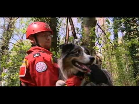 Rettungshundebrigade IDC® Geschirr-Julius-K9®