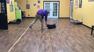 San Antonio Dog Training Co. Panther