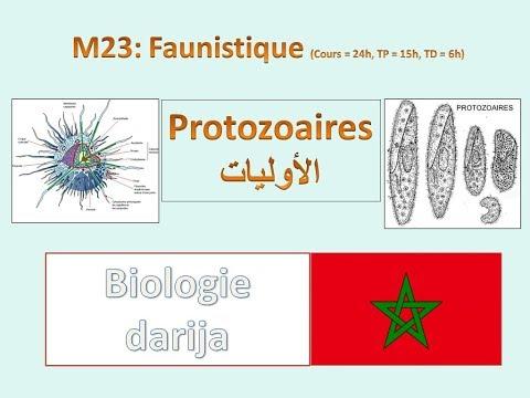 protozoaires sv3 b darija شعبة الأوليات