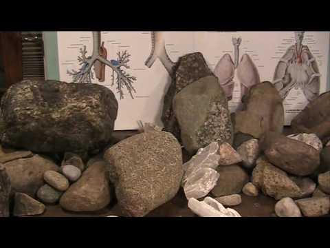 Yale University confirms Mudfossils