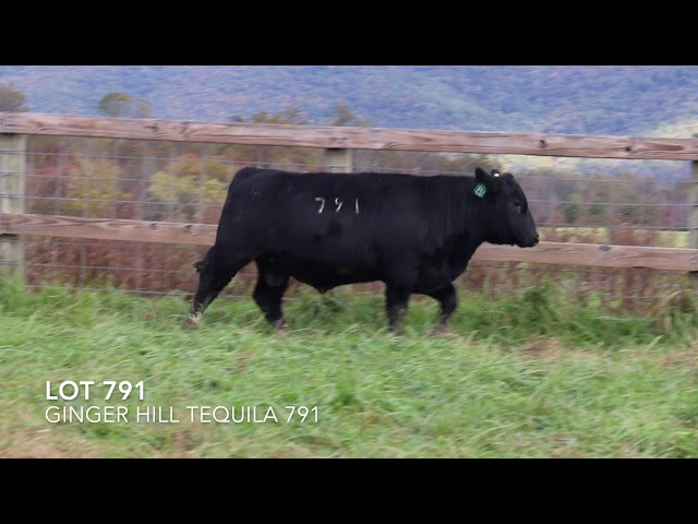 Ginger Hill Angus Lot 791