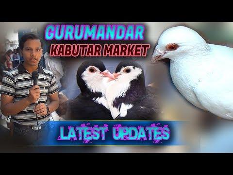 Guru Mandir pigeon Kabutar Market 25-3-2018 Latest Update Jamshed