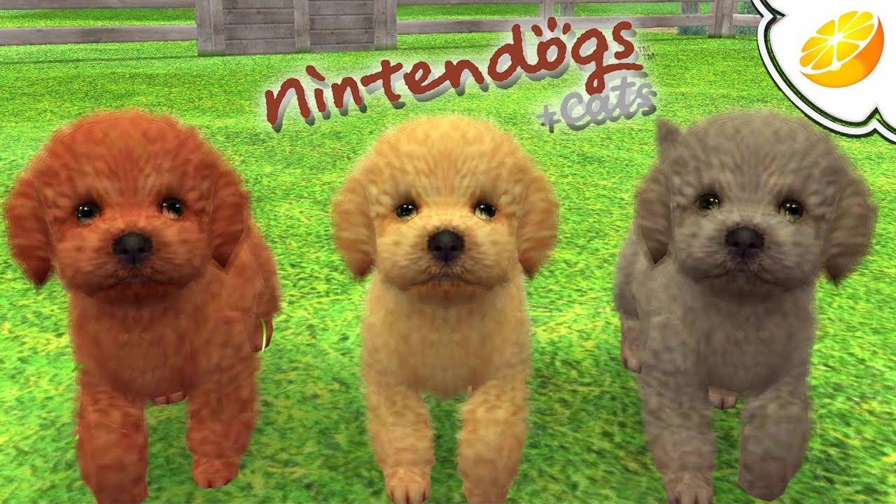nintendogs cats 3ds gratuit