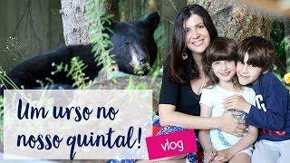 Visitas de urso no nosso quintal!   Vlog Ep.14  • Lu Azevedo