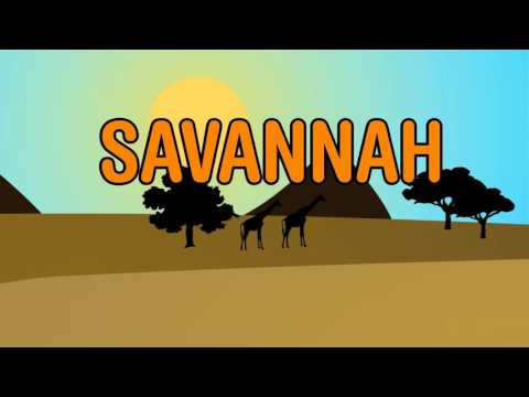 Diviners ft. Philly K - Savannah (Lyrics / Lyric Video)