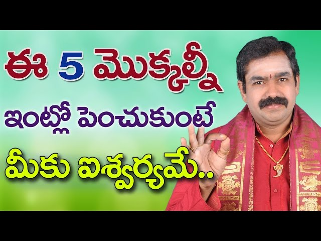 ? ??? ????????? ????????????????  ???? ????????? devotional plants Chirravuri Foundation Telugu