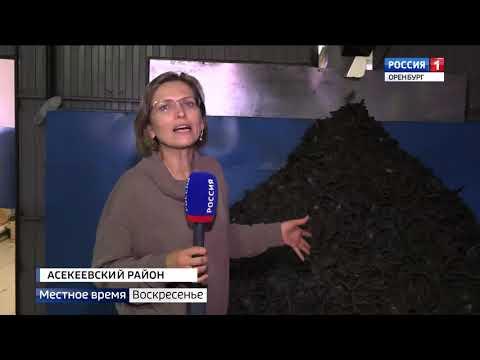 В Асекеевском районе делают экологически чистое льняное масло