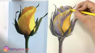 The Yellow Rose Drawing Timelapse YouTube