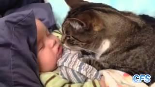 Неожиданная любовь  кошек к маленьким детям!!!!