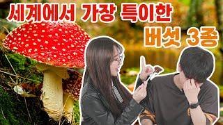 이름만 들어도 특이한 버섯 3종을 만나보았다! 비쥬얼도 남다른 버섯3종 리뷰! | Ripple_S