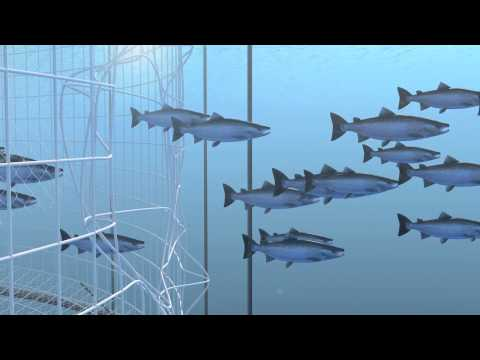 How Seafood is Farmed: Net Pens