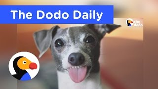 Best Animal Videos You Have To Watch Today | The Dodo Daily Ep. 2