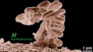 Preventing and Treating Diarrhea with Probiotics