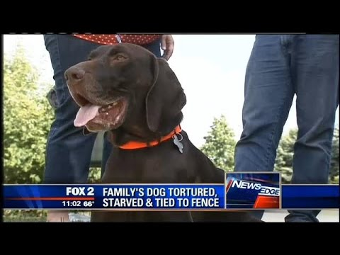 Family's dog found tortured, starved and tied to fence
