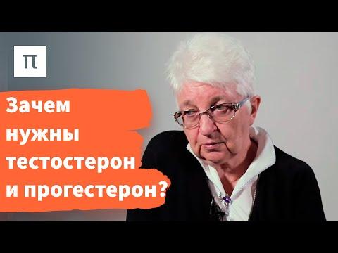Половые железы – Ольга Смирнова / ПостНаука