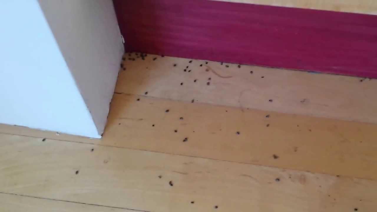 Carpet Mites Uk  Floor Matttroy
