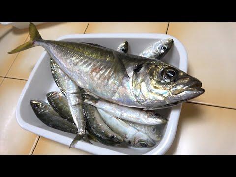 【爺ちゃんの晩飯】自分で釣ったイワシとヒゲの親分にもらったアジ
