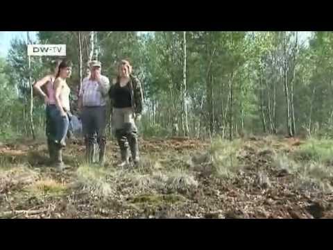 New bogs in Belarus | Global Ideas
