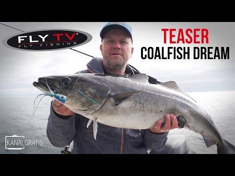 [TEASER] FLY TV -  Coalfish Dream - Fly Fishing for Big Coalfish