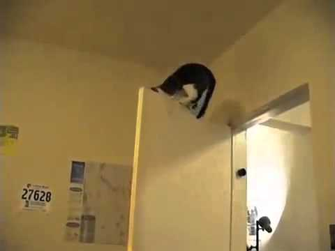 Коты ниндзя и их трюки