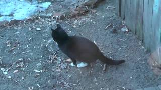 Три  чёрных кошки перезимовали и...     09. 04. 2019