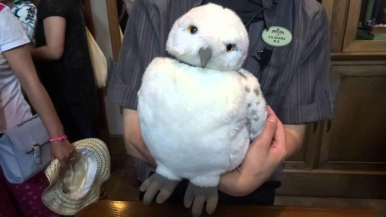 japan trip universal studios real owl fake owl youtube