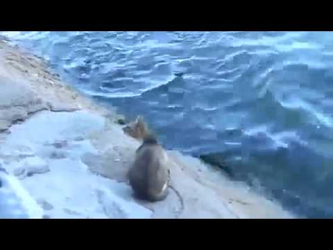 Skilled Street Cat Catches Fish From The Sea