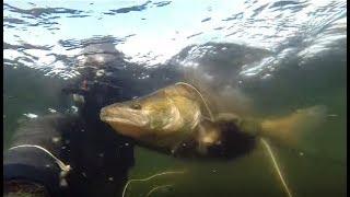 Подводная Охота на Судака с Космической Прозрачностью.(Эта подводная охота состаялась на Каневском водохранилище (р. Днепр) совместно с Виталием Лахтиным (Виталик..., 2016-04-01T20:56:56.000Z)