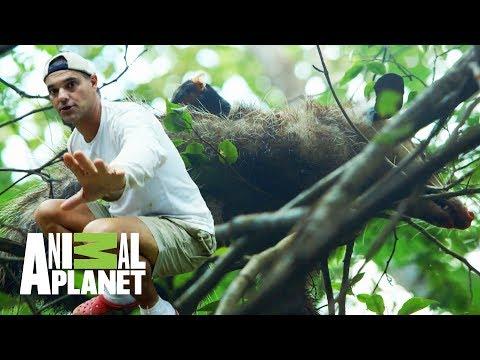 Un tlacuache para Frank | Wild Frank en México | Animal Planet