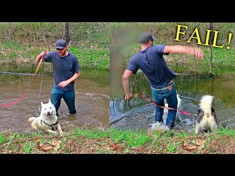 I Let My Dogs Walk Me For A Day!