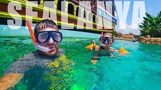 Отдых в ТУРЦИИ 2019!!! Морской парк SEALANYA полный обзор. Дети в восторге от скатов!
