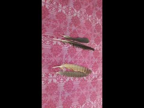 काले कौवे और उल्लू के पंख से काला जादू/BLACK MAGIC FROM CROW AND OWL FEATHER Contact No. 7982256503