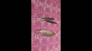 काले कौवे और उल्लू के पंख से काला जादू  BLACK MAGIC FROM CROW AND OWL FEATHER Contact No 7982256503
